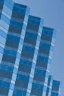 Bird on Blue Building