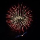 Bird Fireworks