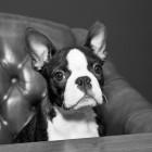 Fredo at Meeting