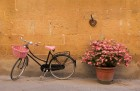 Pink BIke in Siena