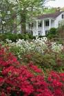 Smith Plantation in Spring