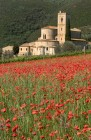 Sant'Antimo Poppies