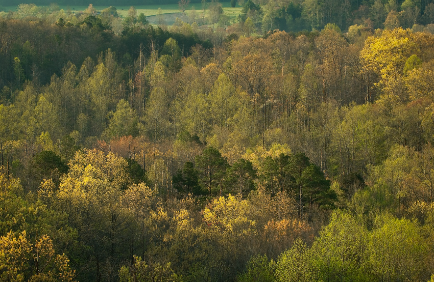 Spring Greens at Foothills