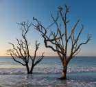Two Trees at Botany Bay