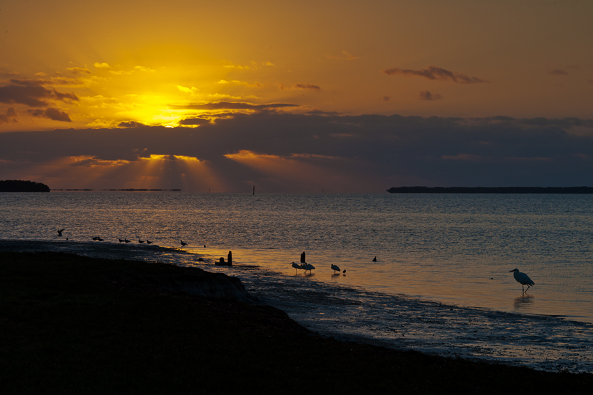 Sunrise at Flamingo
