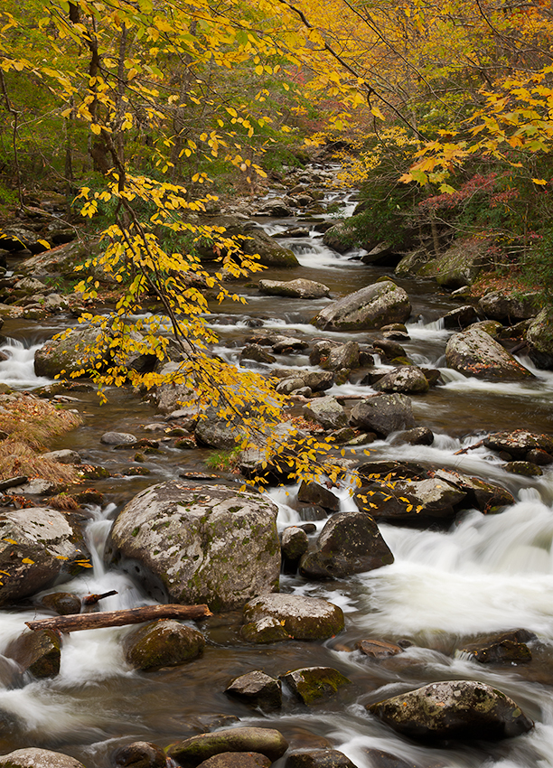 Smokies Fall Color Over River