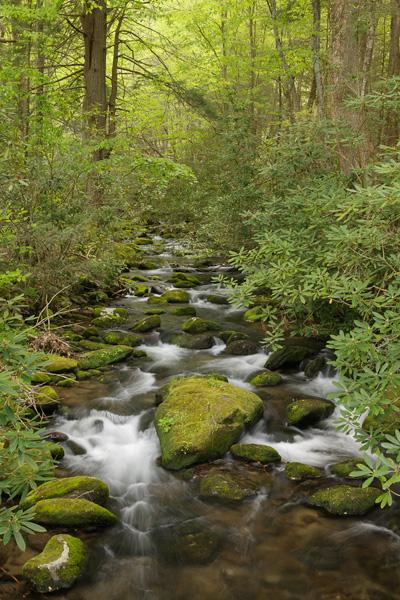 Jakes Creek in Elkmont in the Smokies.