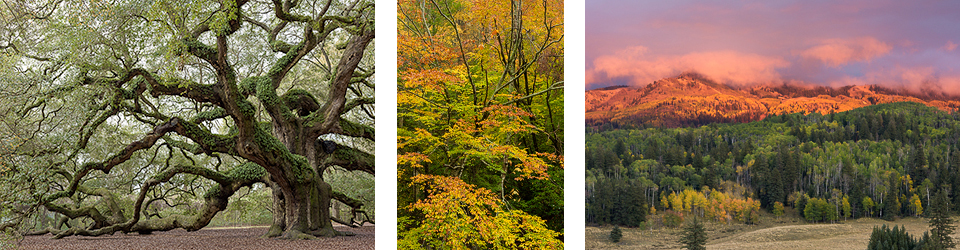 Tom Vadnais Photography