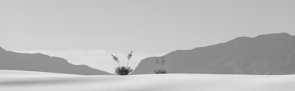 White Sands Yucca Pano. (Nikkor 80-400mm on Nikon D810.)